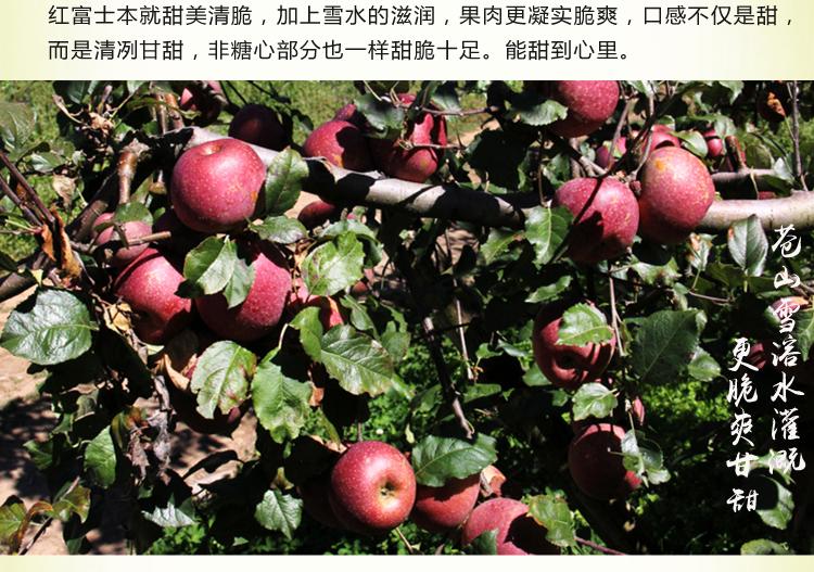 [三营镇]红富士糖心苹果